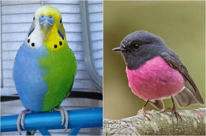 Животные и насекомые, которые не совсем соответствуют представлениям о раскрасках и цветах этих существ.