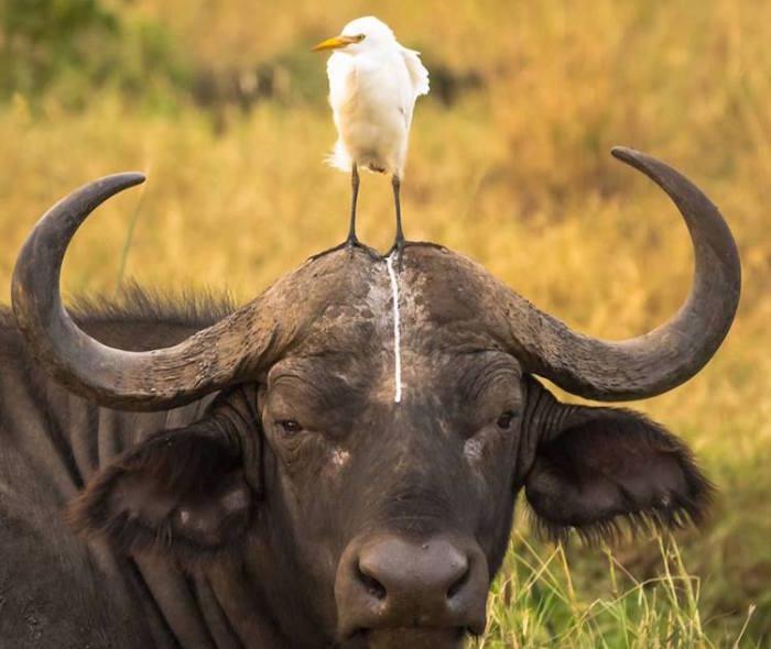 Говорят, если птичка на кого-то накакала — это к деньгам. Автор фотографии: Том Стаблес (Tom Stables).