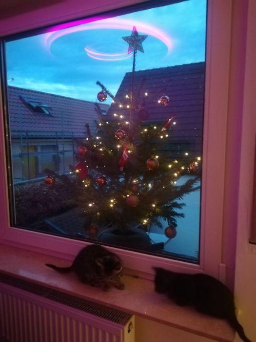 Красиво, надежно, долговечно, но не все оценили такой вариант установки новогодней елки.