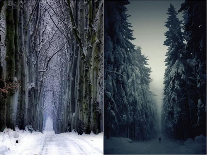 Зимний сказочный лес.