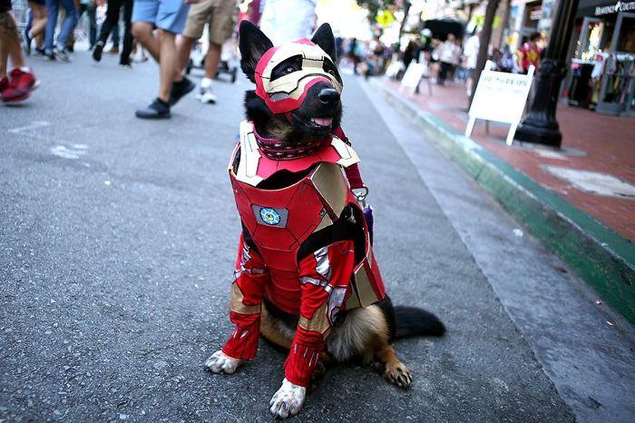 Четвероногий участник фестиваля в костюме главного героя фантастического фильма «Железный человек».