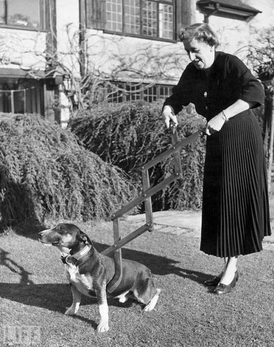 Странное устройство приводило в ужас любителей животных, (1940 год).