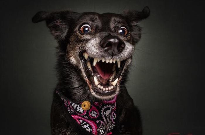 Целая гамма эмоций, отразившихся на мордочках собак.