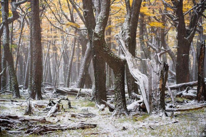 Первый снег отлично контрастирует с не опавшей листвой.