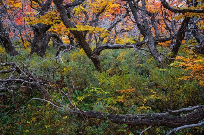Необычайный и таинственный дар природы, привлекающий современных фотографов.
