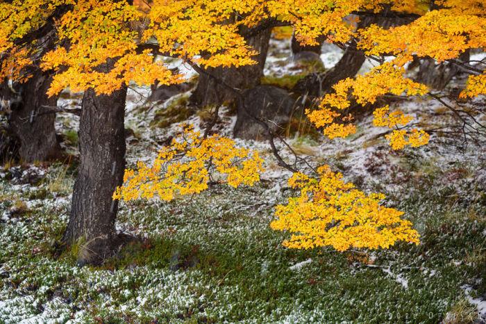 Природа национального парка весьма разнообразна.