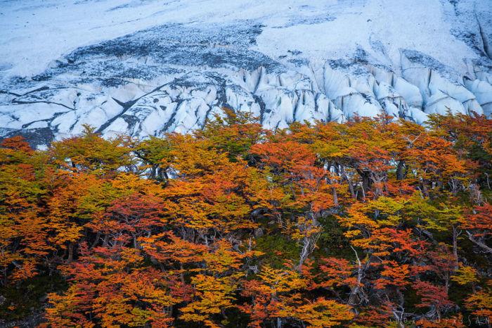 Роскошная фотография, на которой запечатлена золотая осень.