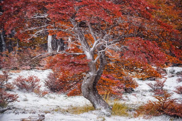 Осенние краски - это всегда красота, которая лечит душу.