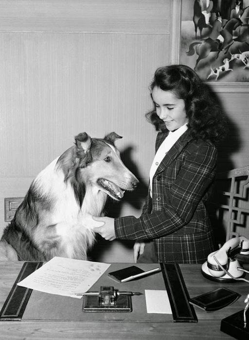 На съёмках «Лесси возвращается домой», 1943 год.