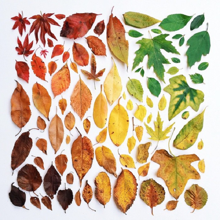 Невероятные краски, в которые осень окрашивает деревья и травы, содержат в себе множество оттенков, придающих осени ее своеобразный шарм.