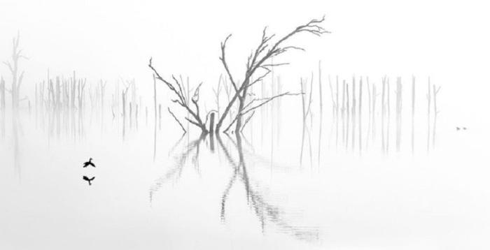 1-е место в любительской категории «Природа/Пейзаж» занял австралийский фотограф Рэй Дженнингс (Ray Jennings).