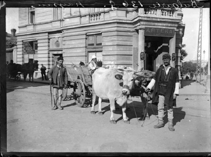 Болгарский крестьянин, 1908 год.