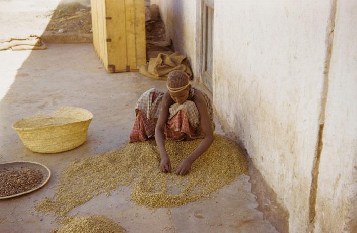 Повседневная жизнь в Эфиопии.