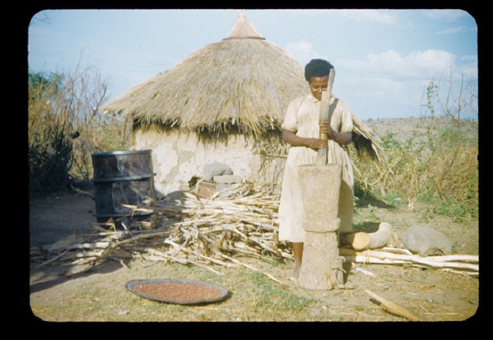 Эфиопка возе своего жилища обрабатывает пшеничные колоски.