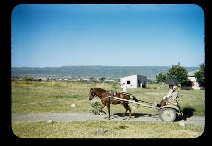 Самодельная повозка с большими колесами, запряженная в лошадь.