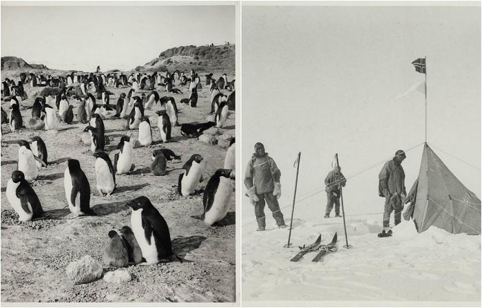 Фотографии экспедиции Роберта Скотта на Южный полюс.
