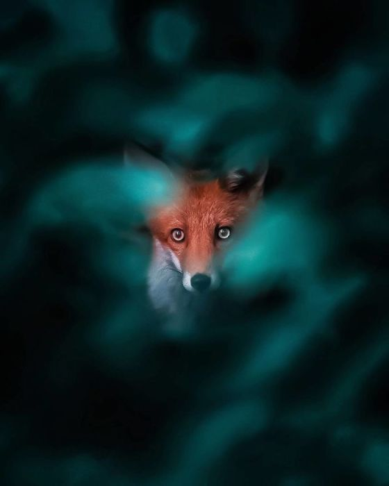 Рыжая красавица с умными, пронзительными глазами.