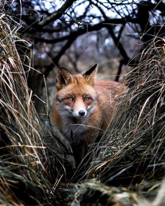 Красивый снимок удивительного зверька на фоне дикой природы.