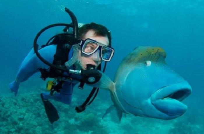 Дайвер играет с причудливой рыбой.