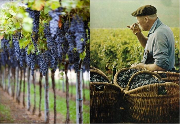 Франция исстари считалась центром виноделия в мире как по количеству производимых вин, так и по ассортименту. В год во Франции производится около 75 млн гектолитров вина.