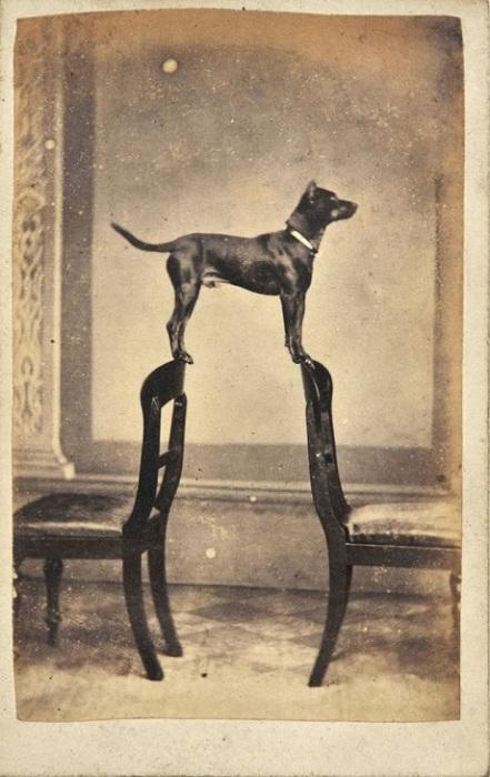 Одна из первых фотографий собак, 1860 год.