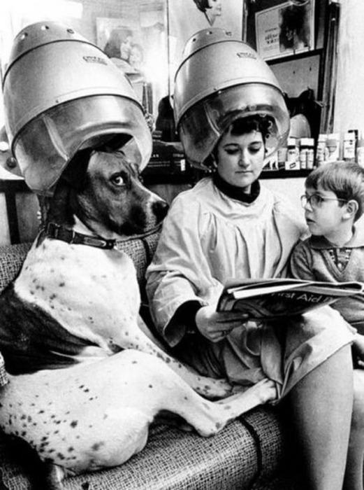 Пёс в парикмахерской в недоумении.
