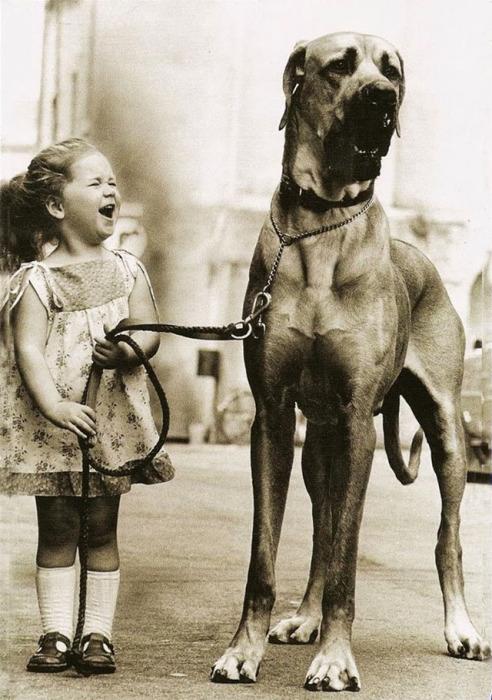 Трогательная дружба между ребёнком и собакой.