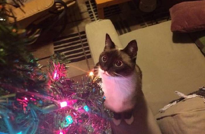 Елочная гирлянда так и притягивает взгляд кошки.