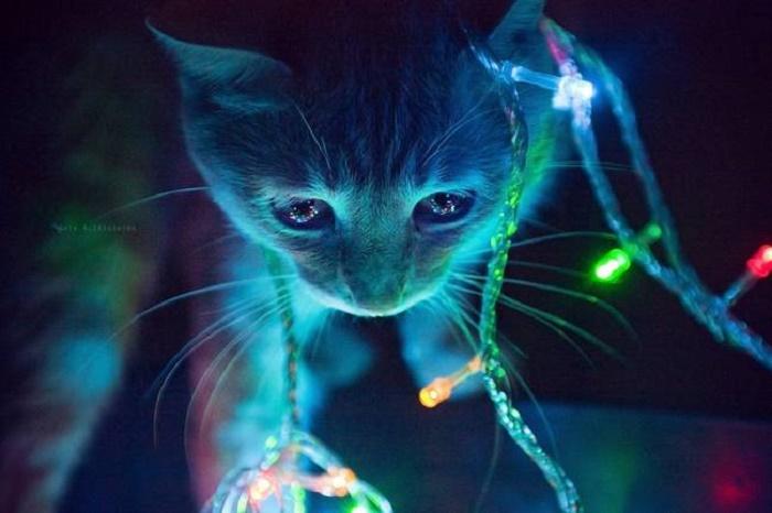 Кошка в неоновой подсветке.