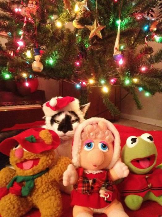 Угрюмый кот в новогодней шапке Клауса, выглядывает из-за мягких игрушек.