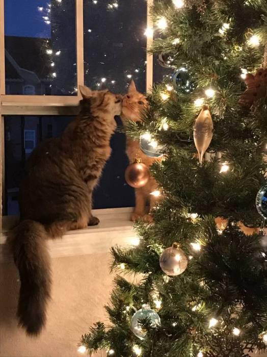 В Рождественскую ночь кот с кошкой целуются возле лесной красавицы.