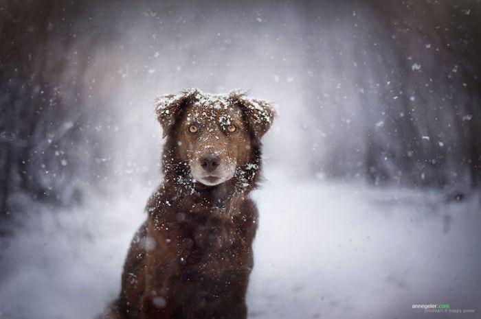 Наслаждение первым снегом.