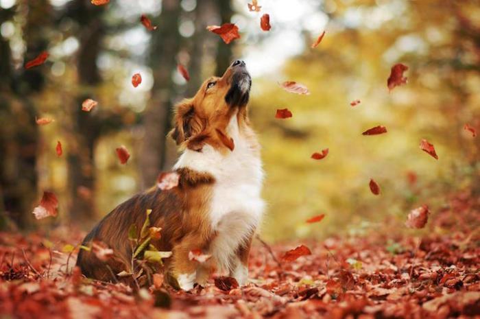 Красавец пёс резвится в парке.