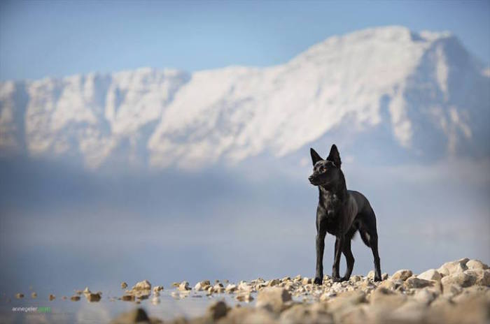 Черный красавец на вершине горы.