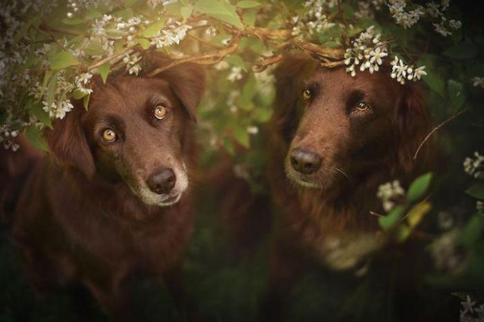 Фотограф стремится уловить индивидуальный характер каждого животного.