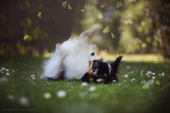 Пёс, играющийся с падающими листьями.
