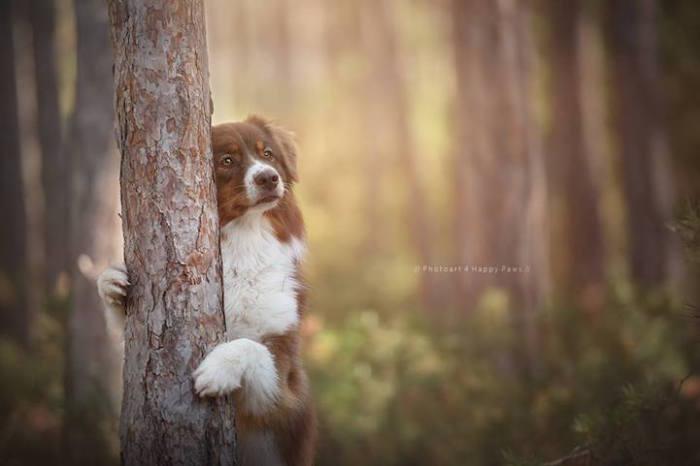 Песик наслаждается лесной тишиной.