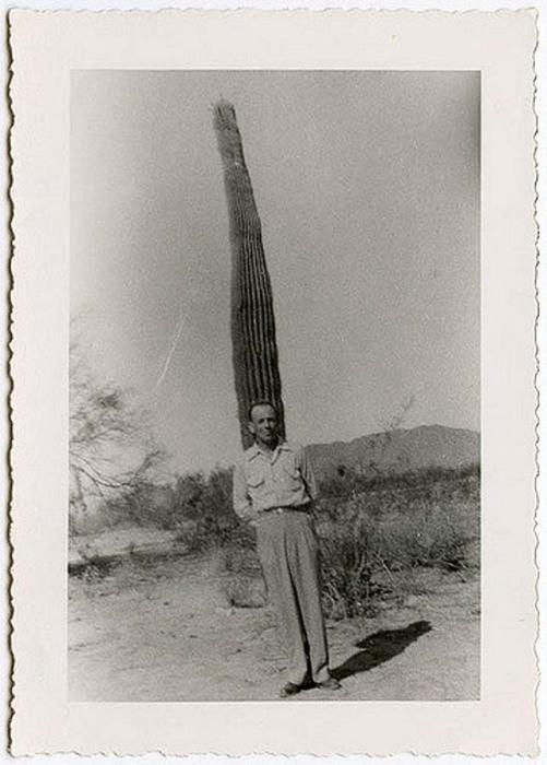 Мужчина зафиксировал момент жизни на фоне высокого кактуса.