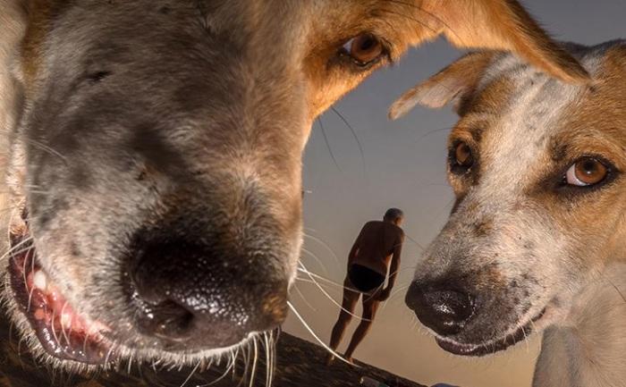 Бродячие и домашние собаки в объективе британского уличного фотографа Дуги Уоллеса.