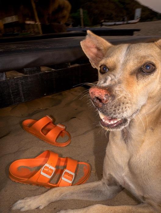 В битвах за территорию и еду, многие бродячие собаки получили увечья и шрамы.