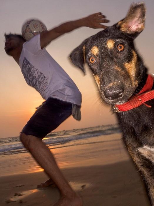 Бродячие собаки Гоа очень часто приходят на пляж, чтобы понаблюдать за заходящим солнцем.