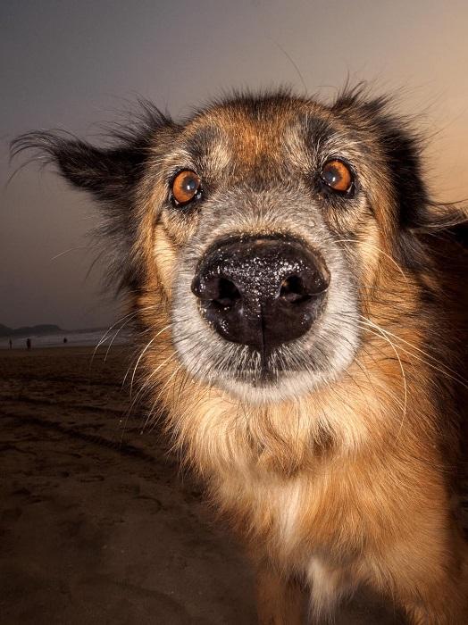 Ежедневно бродячие собаки стараются выжить на пляжах Гоа, питаясь отбросами или подачками от туристов.