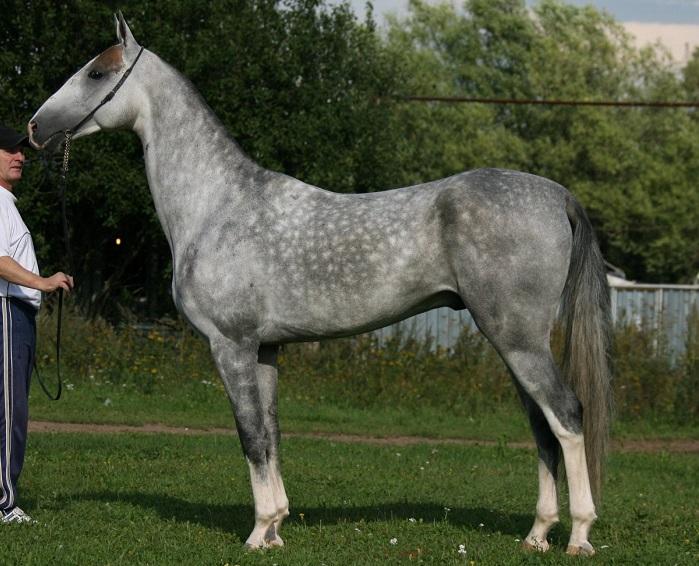Довольно редкий для лошадей окрас, является результатом искусственной селекции.