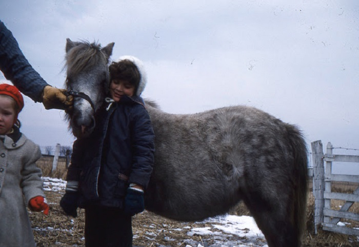 Лучший друг цыгана – лошадь.