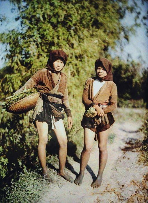 Сбор урожая шпината. Вьетнам, Ханоя, 1910-е годы.