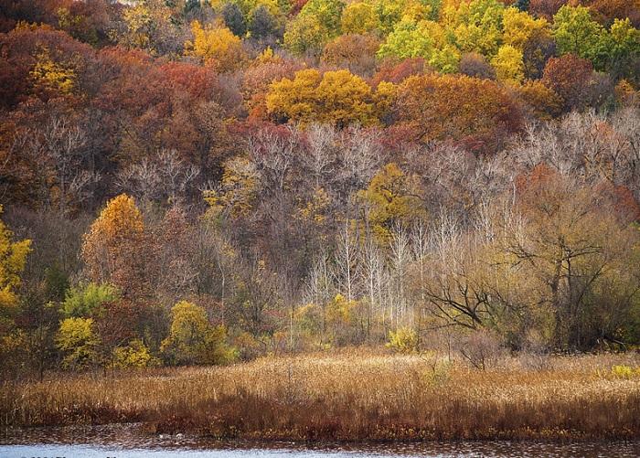 Более трети Верхнего полуострова покрыто густыми, красивыми лесами.