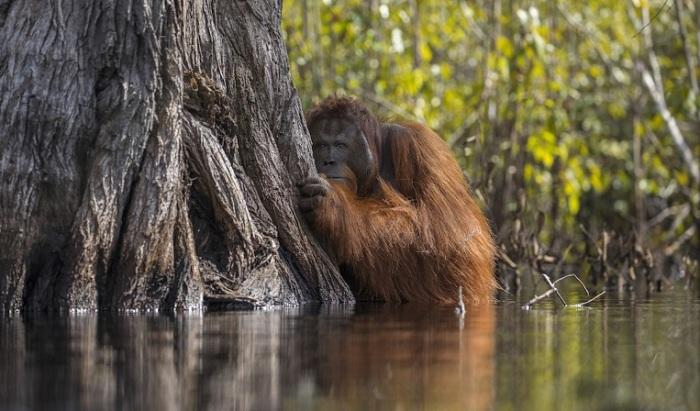Обладателем Гран-при конкурса и 1-го места в категории «Дикая природа» стал сингапурский фотограф Джаяпракаш Джоги Боян (Jayaprakash Joghee Bojan).