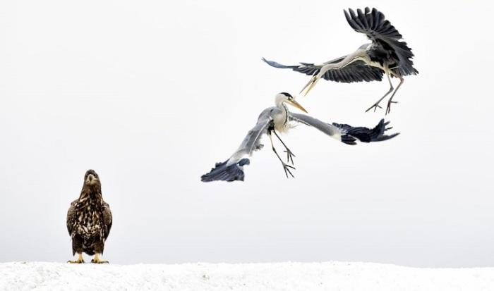 Обладатель 3-го места в категории «Дикая природа» - венгерский фотограф Бенза Мате (Bence Mate).