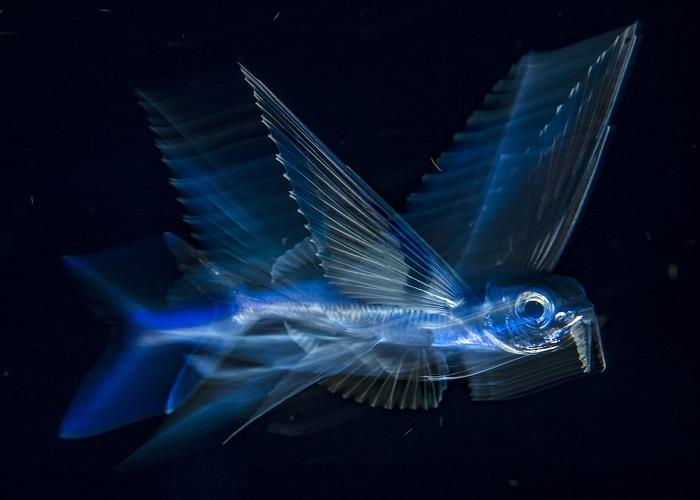 3-е место в категории «Под водой» занял американский фотограф Майкл Патрик О'Нил (Michael Patrick O'Neill).