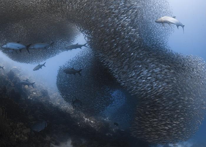 В категории «Под водой» поощрительной премии удостоилась американский фотограф Дженнифер О'Нил (Jennifer O'Neil).